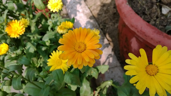 Lumia-1520-Sample-1