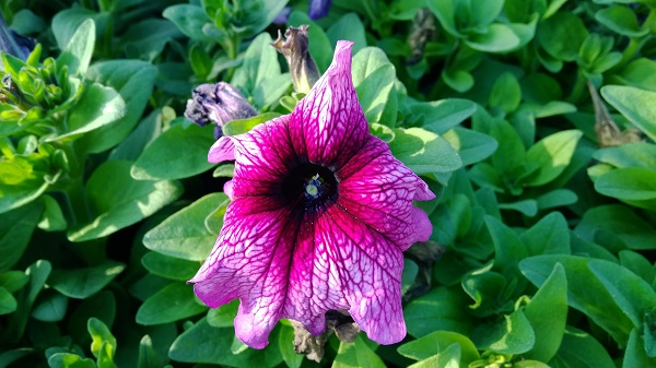 Lumia-1520-Sample-10