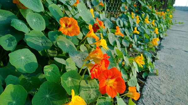 Lumia-1520-Sample-11
