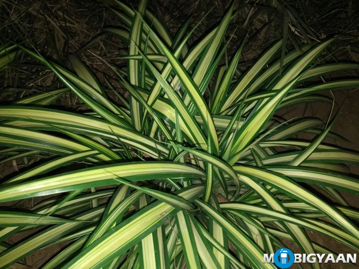 LeEco-Le-Max-Review-Night-Shots-plant-pattern-flash