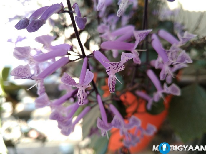 LeEco-Le-Max-Camera-Samples-Daylight-Shots-Purple-Flower-front-focus