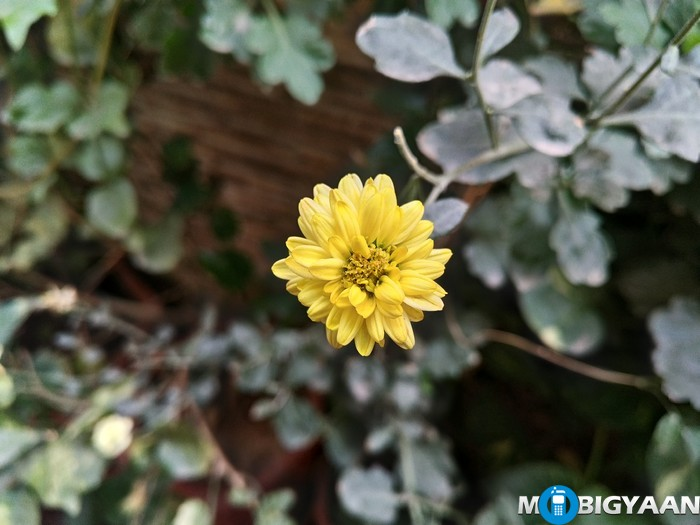 LeEco-Le-Max-Review-Daylight-Shots-Yellow-Flower-front-focus
