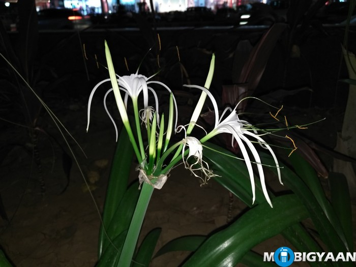 LeEco-Le-Max-Camera-Samples-Night-Shots-Plant-Lilly-Flash-On