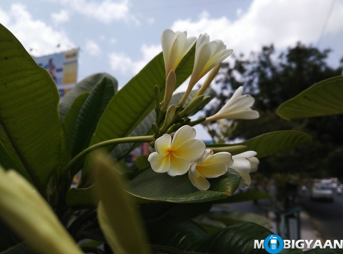 Coolpad-Max-Camera-Samples-13