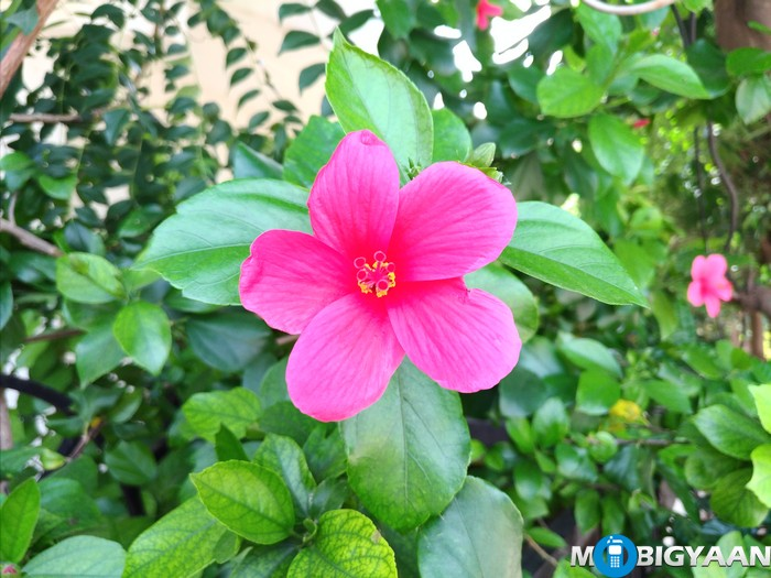 ASUS-Zenfone-3-Camera-Samples-ZE520KL-14
