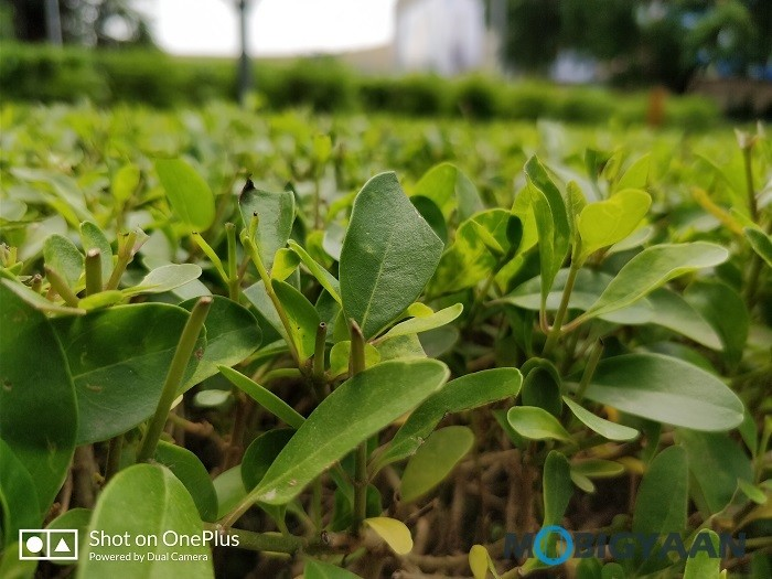 oneplus-5-review-camera-samples-daylight-8