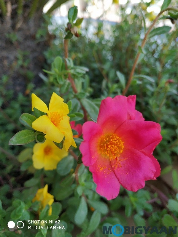 xiaomi-mi-a2-review-camera-samples-daylight-9