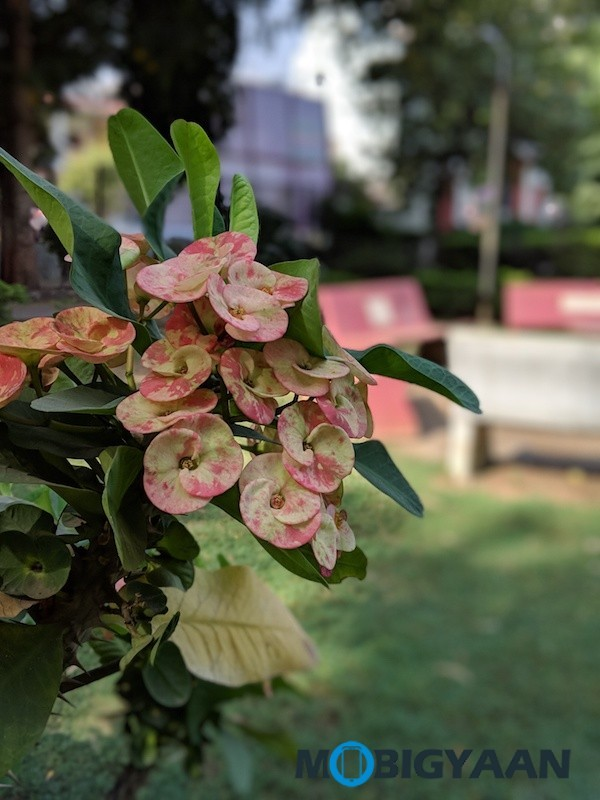 Google-Pixel-3-XL-Camera-Samples-4