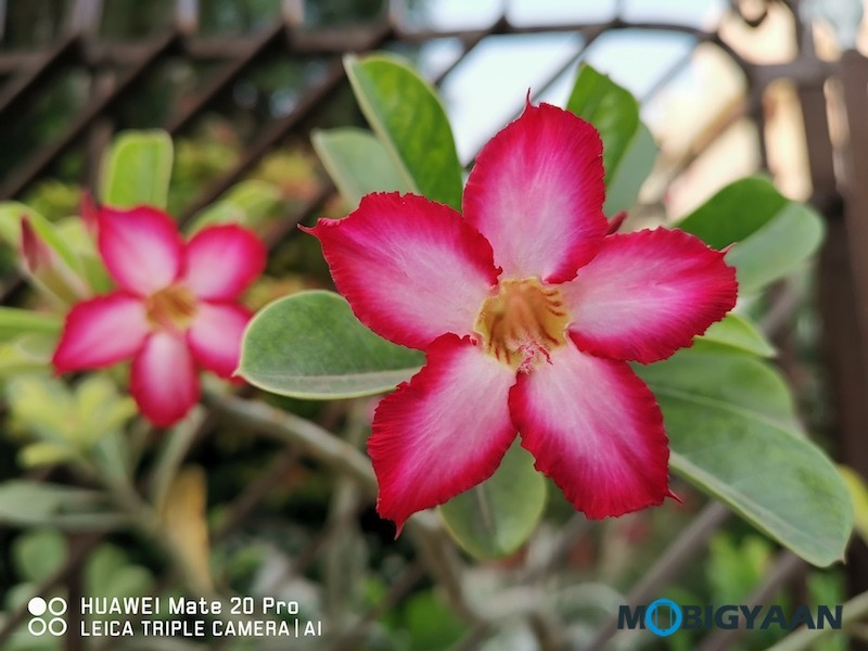 HUAWEI-Mate-20-Pro-Review-Camera-Samples-20