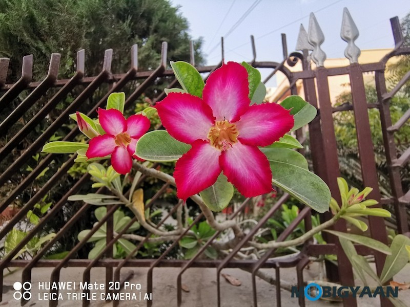 HUAWEI-Mate-20-Pro-Review-Camera-Samples-36