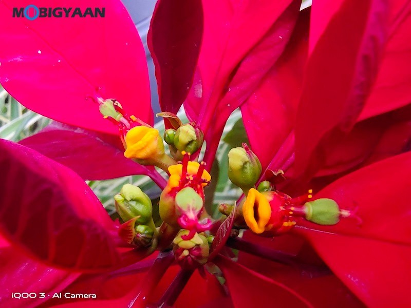 Daylight-iQOO-3-5G-Camera-Samples-Review