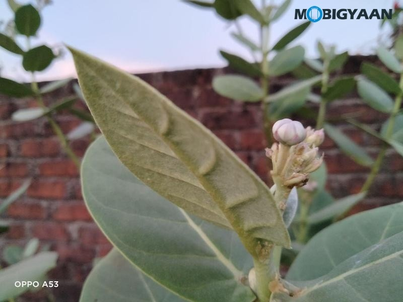 OPPO-A53-Review-Camera-Samples-4
