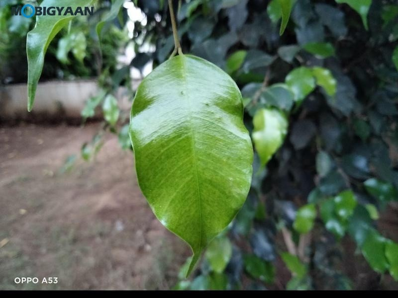 OPPO-A53-Review-Camera-Samples-7
