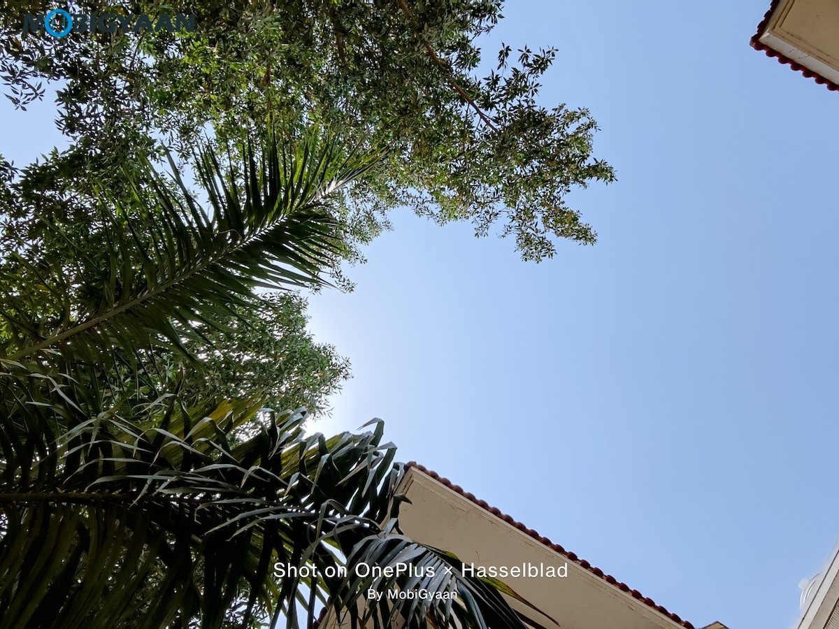 OnePlus-9-5G-Review-48-MP-Camera-Samples-8