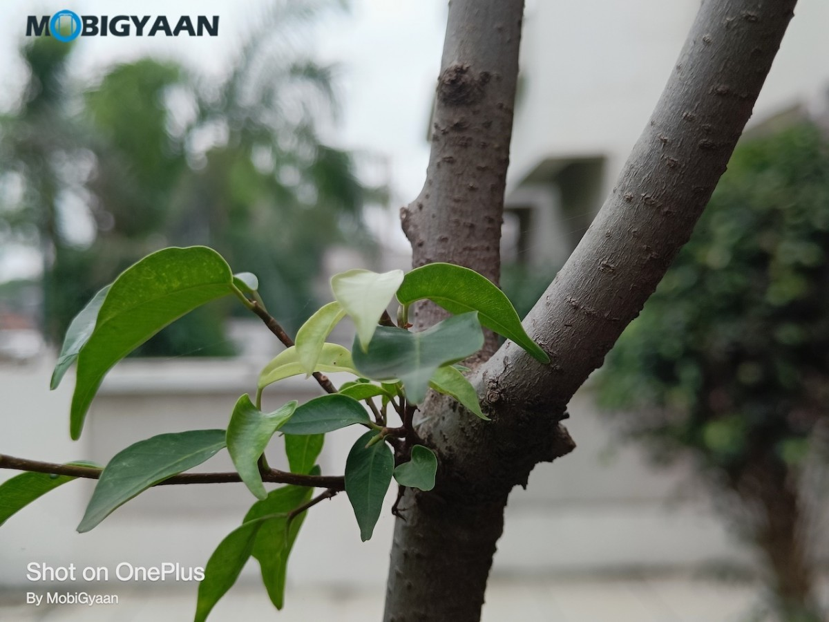 OnePlus-Nord-2-5G-Review-50MP-Camera-Samples-4